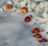 Äppleavverkningen in i den vita fluffiga snön royaltyfria foton