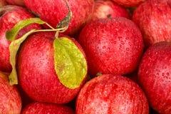 äpplebakgrundsred Arkivbild