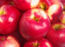 äpplebakgrundsred Royaltyfria Bilder