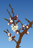 äppleblom blomstrar filialfjädertreen stock illustrationer