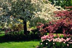 äppleblom blomstrar filialfjädertreen arkivfoto