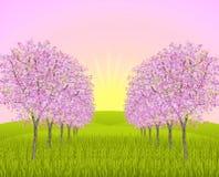 äppleblomningmorgon Arkivbild