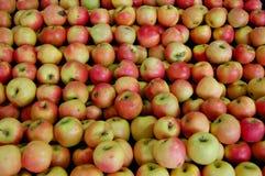äppleförsäljning Royaltyfria Foton