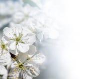 äpplefjädertree Fotografering för Bildbyråer