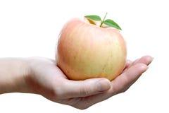 äpplefrukter gömma i handflatan rose Arkivbilder
