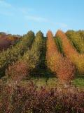 äpplefruktträdgård royaltyfri foto