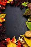 äpplehösten undersöker torra leafs för sammansättning som plundrar vasen Royaltyfria Bilder
