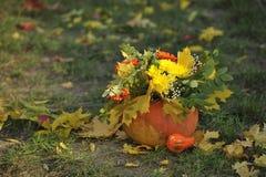 äpplehösten undersöker torra leafs för sammansättning som plundrar vasen arkivfoton
