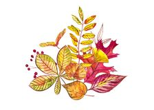 äpplehösten undersöker torra leafs för sammansättning som plundrar vasen Illustrationer som göras av höstbär och sidor på vit bak Royaltyfri Foto