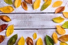 äpplehösten undersöker torra leafs för sammansättning som plundrar vasen Olika färgrika sidor Studioskott som är trä Royaltyfri Bild