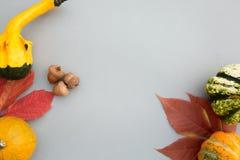 äpplehösten undersöker torra leafs för sammansättning som plundrar vasen Pumpor sidor på pastellfärgad grå bakgrund Höst nedgång, arkivbilder