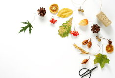 äpplehösten undersöker torra leafs för sammansättning som plundrar vasen Ram Royaltyfria Foton
