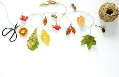 äpplehösten undersöker torra leafs för sammansättning som plundrar vasen Ram Arkivbild