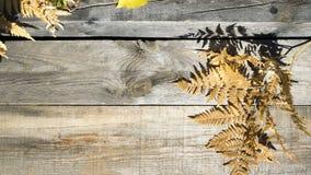 äpplehösten undersöker torra leafs för sammansättning som plundrar vasen Ram av torra sidor för höst på en wood bakgrund Ställe s royaltyfria foton