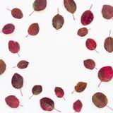 äpplehösten undersöker torra leafs för sammansättning som plundrar vasen Ram som göras av torkade blommor och höstsidor Lekmanna- Royaltyfri Bild