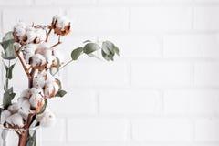 äpplehösten undersöker torra leafs för sammansättning som plundrar vasen Torkad vit fluffig bomull blommar på den vita wood vägge Arkivbilder