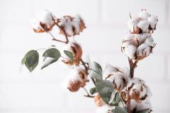äpplehösten undersöker torra leafs för sammansättning som plundrar vasen Torkad vit fluffig bomull blommar på den vita wood vägge Royaltyfri Bild