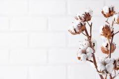 äpplehösten undersöker torra leafs för sammansättning som plundrar vasen Torkad vit fluffig bomull blommar på den vita wood vägge Royaltyfri Foto