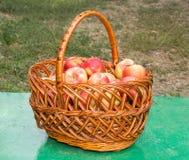 Äpplekorg Arkivbild