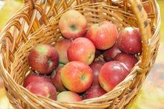 Äpplekorg Royaltyfri Bild