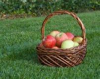 Äpplekorg på grönt gräs Royaltyfri Fotografi