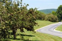 äppleliggandefruktträdgård royaltyfri fotografi