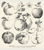 Äpplen. Royaltyfria Foton