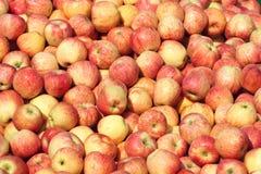 Äpplen Arkivfoton