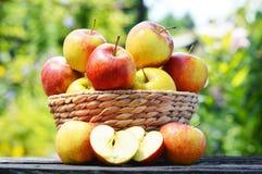 äpplen arbeta i trädgården organiskt allsidigt banta Royaltyfri Fotografi