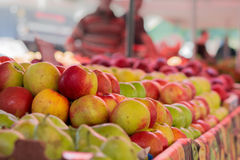 Äpplen av olika variationer Royaltyfri Bild