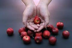 äpplen behandla som ett barn Royaltyfri Bild