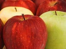 äpplen blandade Fotografering för Bildbyråer