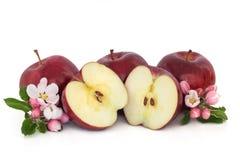 äpplen blomstrar blomman Arkivfoto
