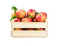 äpplen box trä Royaltyfri Fotografi