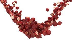 äpplen flödar isolerat över röd white Fotografering för Bildbyråer