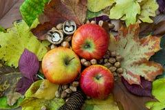 Äpplen höstsidor, sörjer kotten och muttrar Royaltyfri Bild