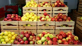 Äpplen i ask Royaltyfri Fotografi