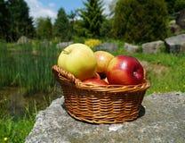 Äpplen i en korg Royaltyfria Foton
