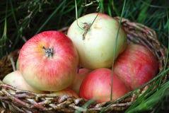 Äpplen i en korg i grönt gräs Fotografering för Bildbyråer