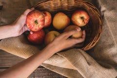 Äpplen i en korg som tas av en kvinna arkivbild