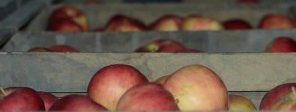 Äpplen i en lagring Royaltyfri Bild