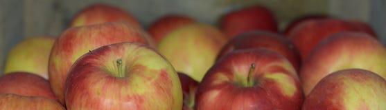 Äpplen i en lagring Royaltyfri Foto