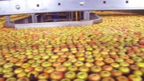 Äpplen i en produktion arkivfilmer