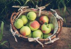 Äpplen i en vide- korg Royaltyfri Foto