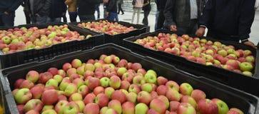 Äpplen i ett lagringsrum Royaltyfri Fotografi
