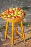 Äpplen i ett vide- magasin på en stol Royaltyfria Bilder