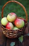 Äpplen i korg Arkivfoton