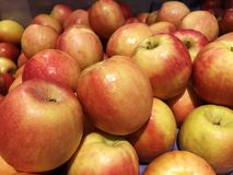 Äpplen i marknaden Röd gul äpplenärbild Turkiska mogna äpplen Fotografering för Bildbyråer
