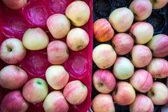 Äpplen i plast- magasin Royaltyfri Foto