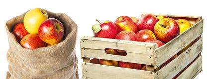 äpplen i säck och i ask royaltyfri bild